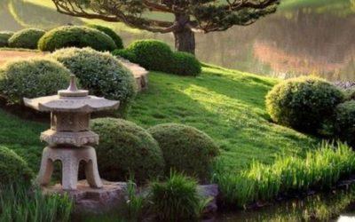 Focus sur la pratique du Reiki traditionnel japonais